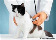 Inflamación en Mascotas