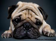 Esto Causa Defectos Debilitantes en las Mascotas Que Normalmente No Se Ven en la Naturaleza