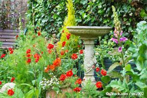 Salmonella has visto p jaros muertos o enfermos en tu for Bebederos para aves jardin