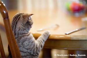 Comida Para Gato