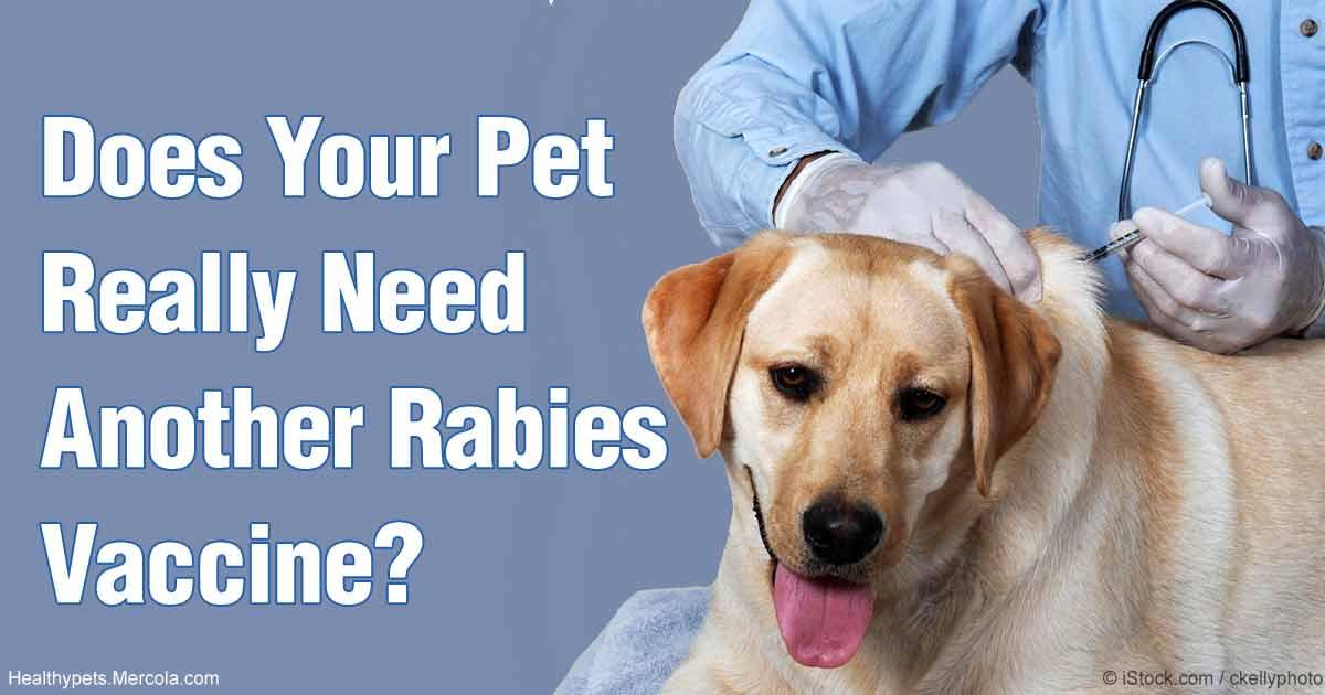Recombinant distemper canine vaccine manufacturers