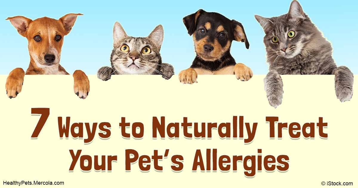 Natural Ways To Treat Allergies In Dogs