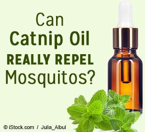 catnip oil