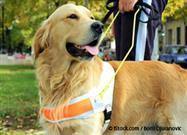 Perros Detectores de Diabetes