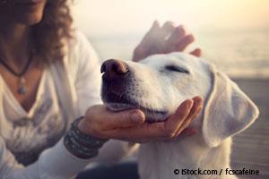 Bienestar en Perros Adultos