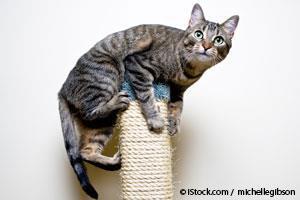 Como Entrenar a Tu Gato