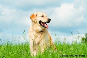 dog tethering