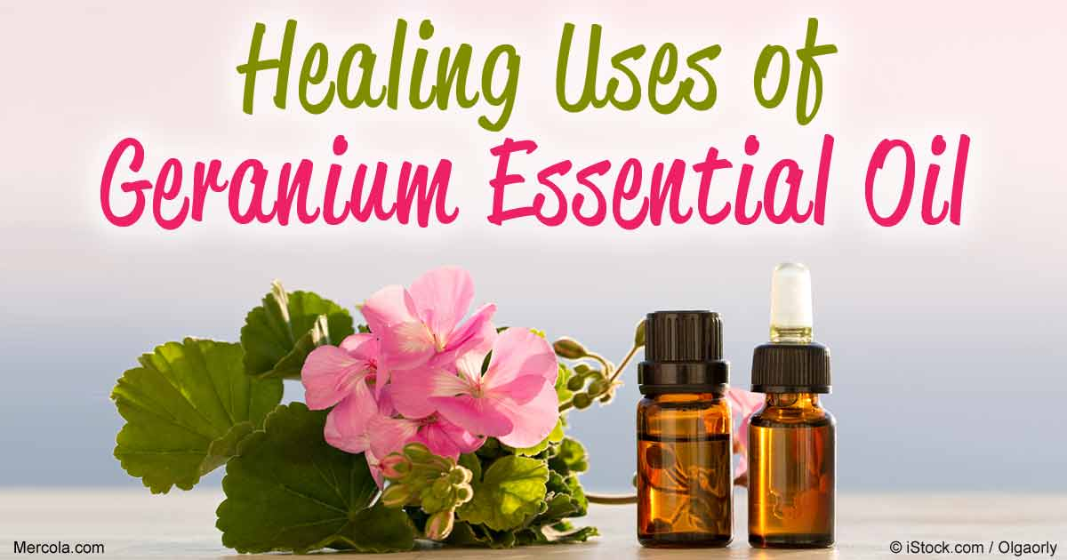 recipe: geranium essential oil pregnancy [33]