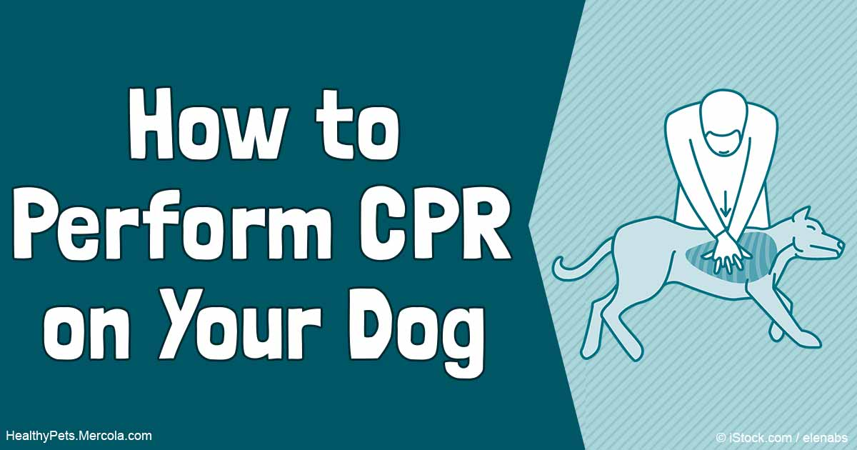 The New Dog Cpr Guidelines