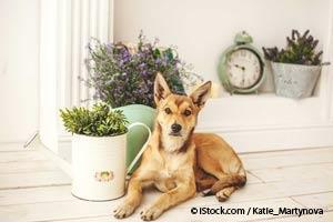 Plantas Venenosas Para Mascotas