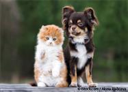 Amantes de Gatos y Perros