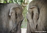 Little Rock Zoo a 'Nursing Home' for Older Elephants