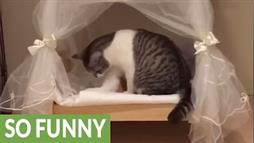 Why Cat Videos Own the Internet: A Compilation