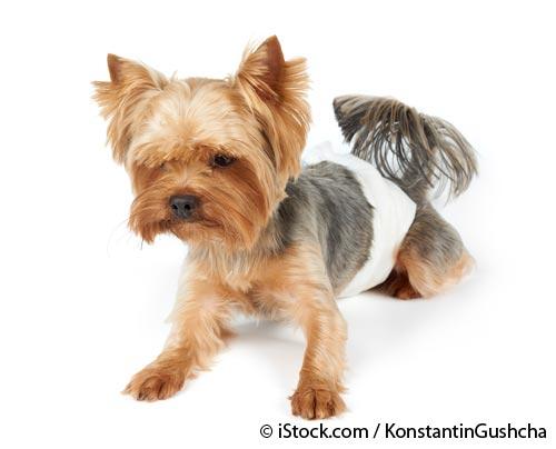 problema de orina en perros