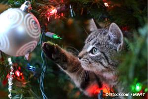 10 Peligros Para las Mascotas en los Días Festivos