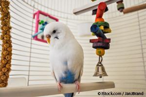 Peligros Para los Pájaros
