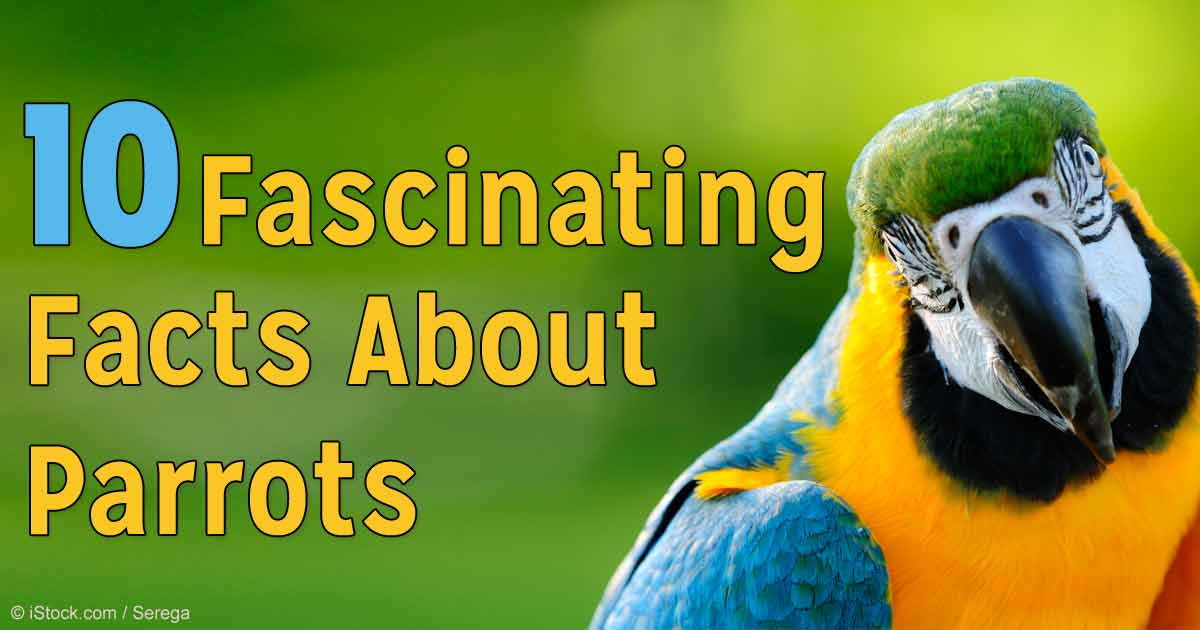 10 Interesting Facts About Parrots