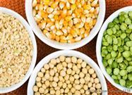 Soya y Maíz Transgénicos: Niéguese a Consumir Estos Alimentos - Podrían Destruir sus Órganos Reproductivos