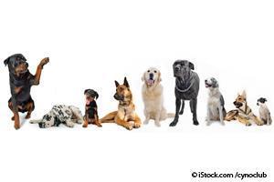 Perros con Confianza