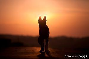 10 Dog Breeds That No Longer Exist