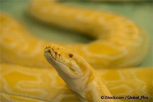 Serpiente Enferma