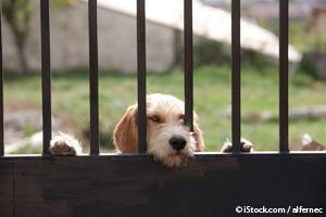 Perro Ignorado