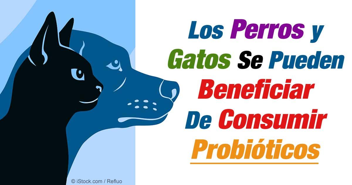 los perros y gatos pueden beneficiarse de los probióticos