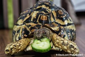 Enriquecimiento Ambiental Para Reptiles