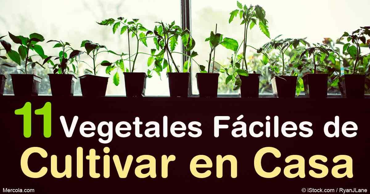 Plantas faciles de cultivar en macetas casa dise o for Cultivar vegetales en casa