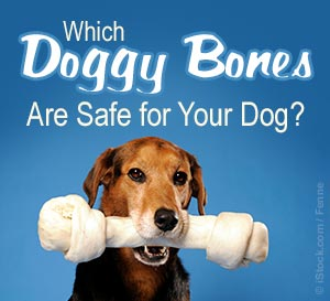 Bones Can Kill Your Dog