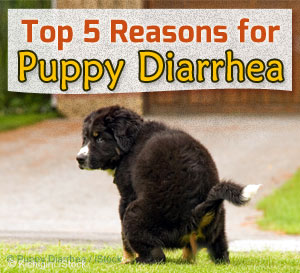 puppy diarrhea