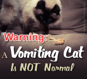 vomitting pet cat