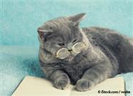 aging cat care