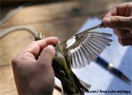 bird ancestor