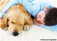 dog rest time
