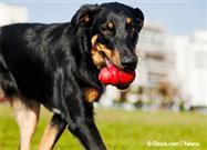 ¿Debes Darle a Tu Perro Juguetes Rellenables con Alimento?