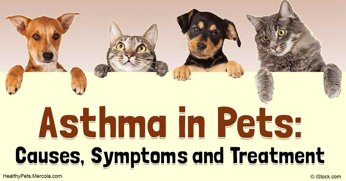 the causes symptoms diagnosis and treatment of mast cell tumors mct in dogs and cats If you have an fna diagnosis of mct and the tumour is in a site where wide  in  the dog has limited value in cases of mast cell disease  (a) treatment  algorithm for a cutaneous mass without signs of metastasis.