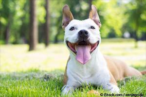 Bicarbonato Para Perros