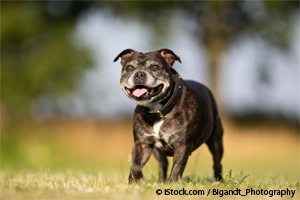 Castración y Esterilización Canina
