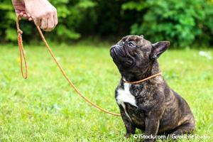 Comandos Para Perros