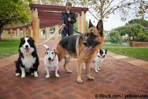 Como Saludar a los Perros