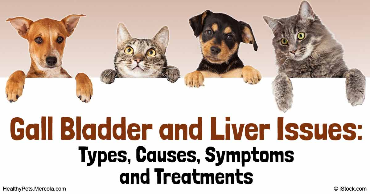 Cholangiohepatitis Types Causes Symptoms And Treatment