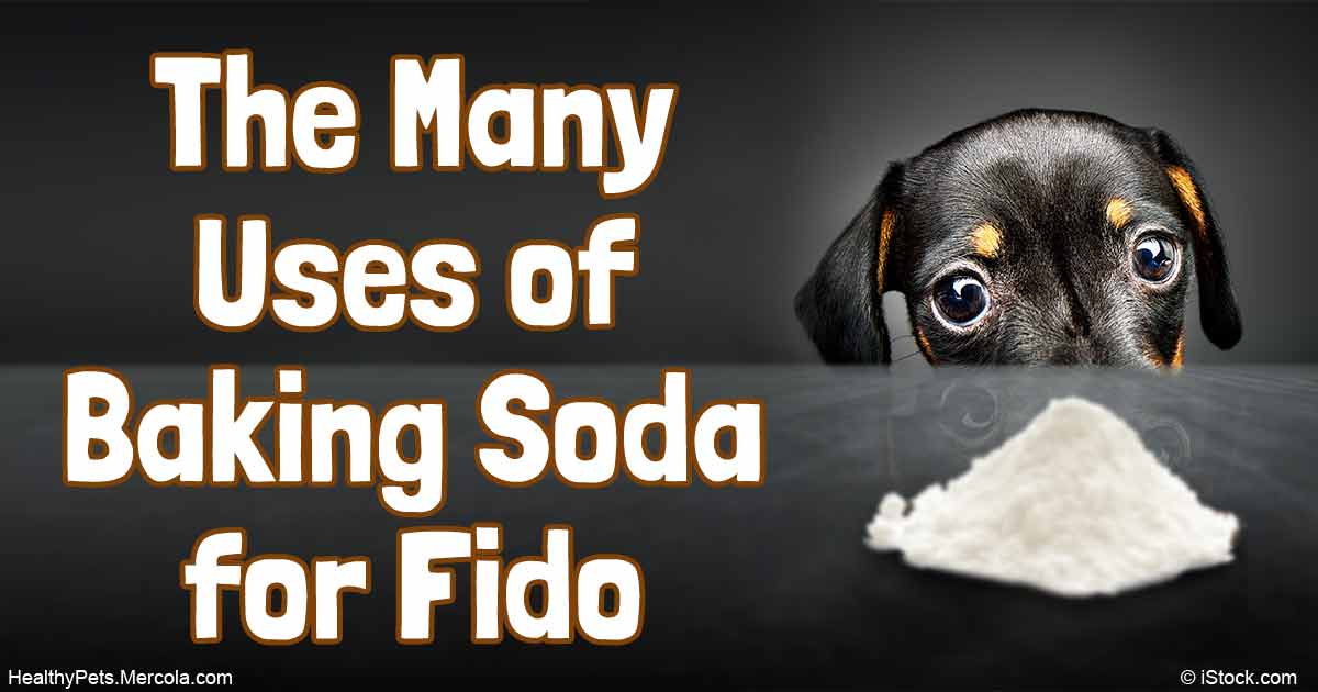 What Happens When You Drink Water with Baking Soda on an ...