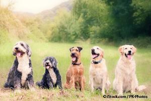 Perros de Pura Raza