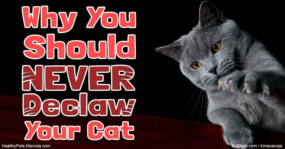 playful cats breeds