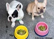 Grasas Saludables Para Perros