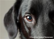 Enfermedades Oculares en los Perros