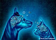 ¿Qué Hace a un Perro Inteligente?