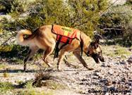 What Does It Take to Be a Search and Rescue Dog?