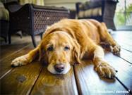 senior dog mobility